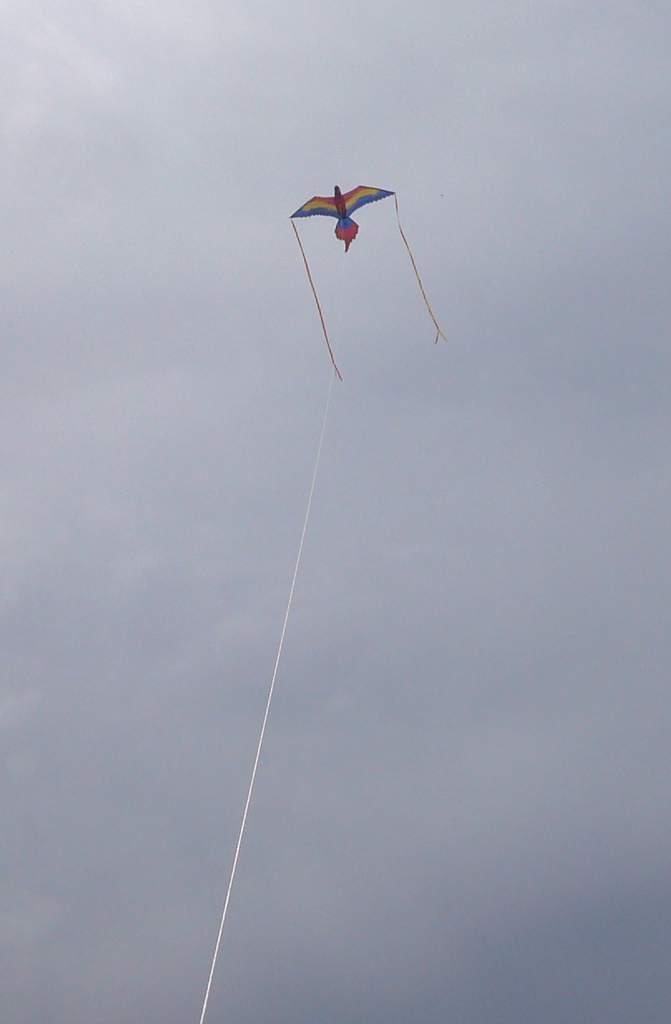 X-KITES,デラックスカイト,Macaw